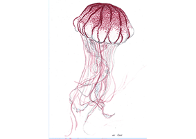 Pacific Sea Nettle (Chysaora fuscenscens) - The Pacific sea nettle bell can grow to over a metre in diameter, with their tentacles being up to 5 meters long.